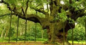 38DegreesSherwoodForest
